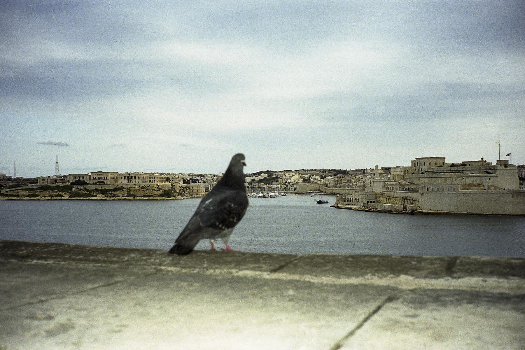 Malta, Malta