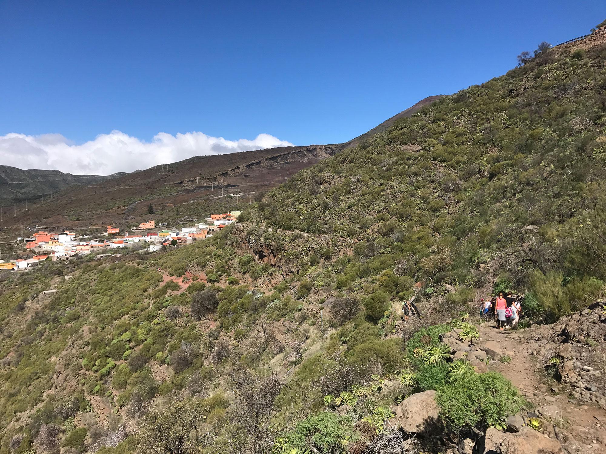 almendros_en_flor_Tenerife2.jpg