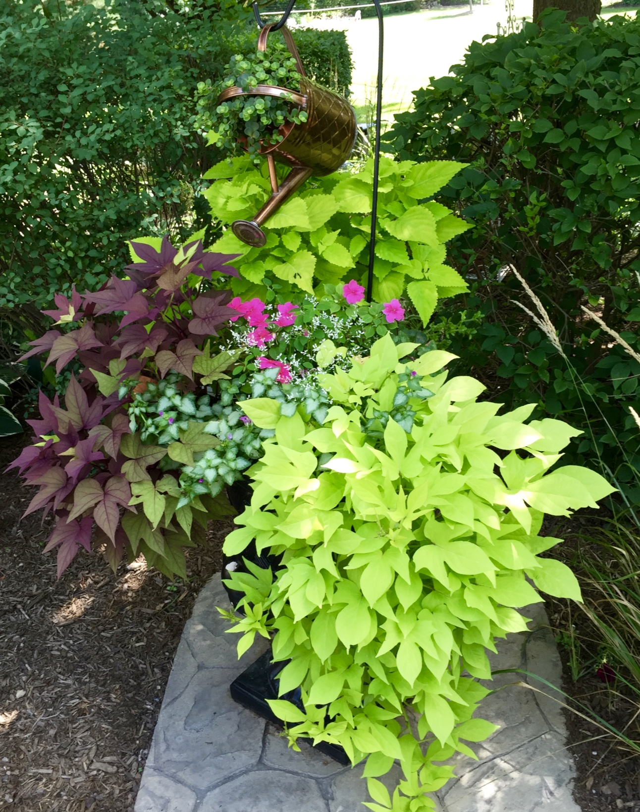 Purple and green potato vine spilling over the edge of the planter.