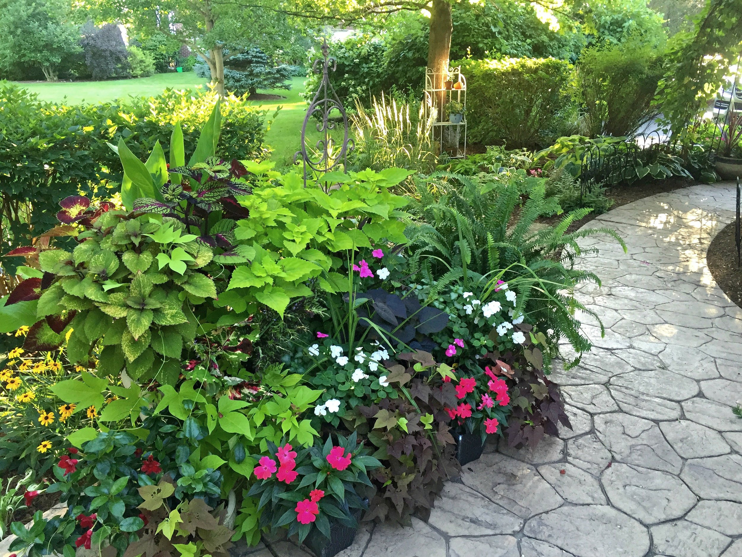 There are actually 7 individual pots in this grouping, with the coleus acting as the perfect back drop.