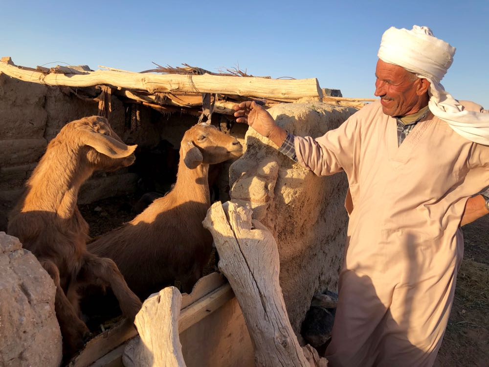 Muhammed and his goats.jpg