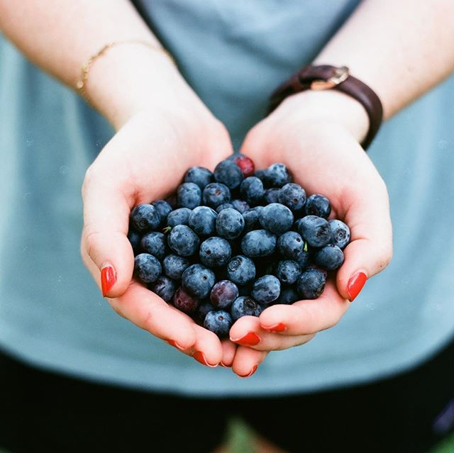 It's National Blueberry Pie Day! How are you celebrating?!