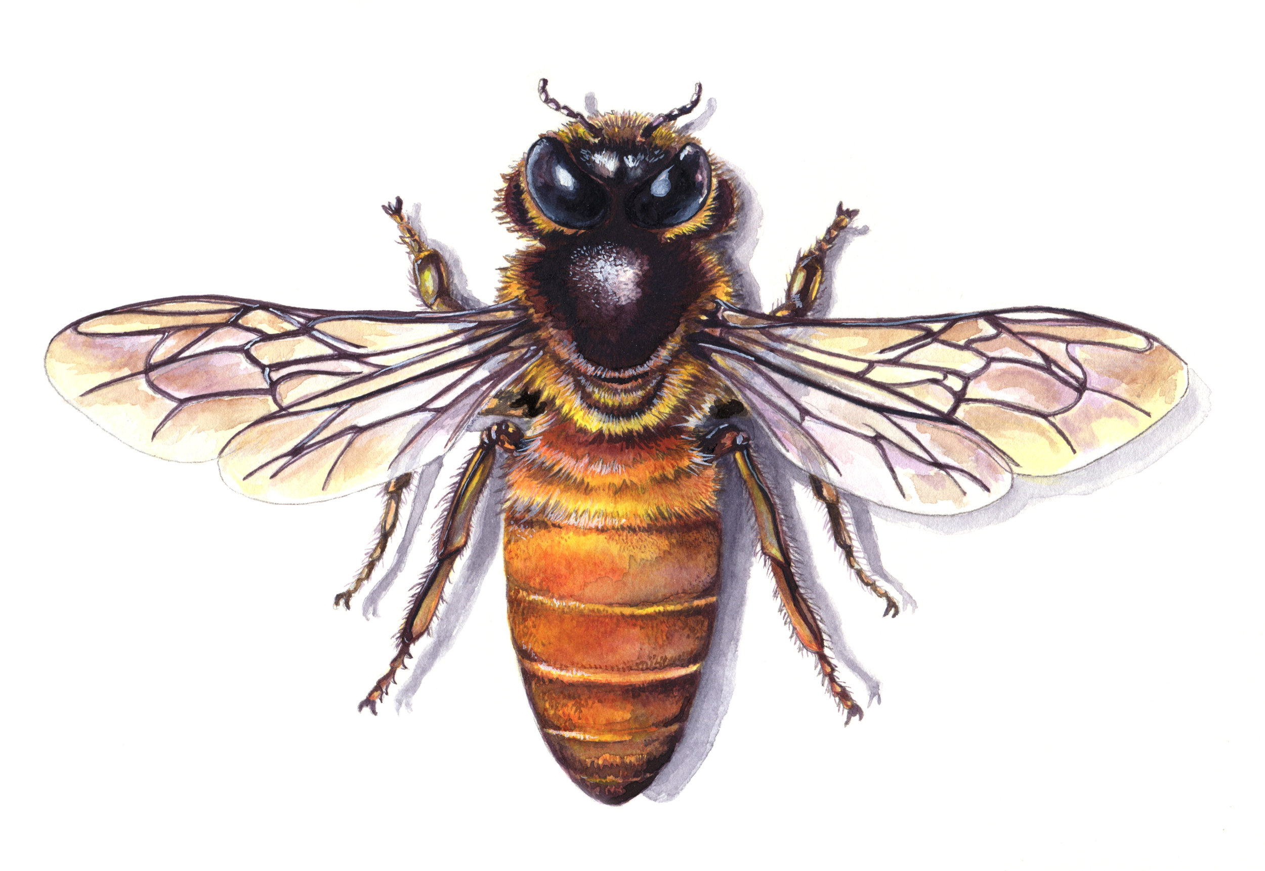 save the bees - buy art that supports the Honeybee Conservancy