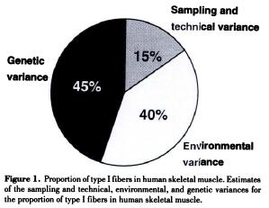 Source: Simoneau JA & Bouchard C. (1995). Genetic determinism of fiber type proportion in human skeletal muscle. FASEB J 9, 1091-1095