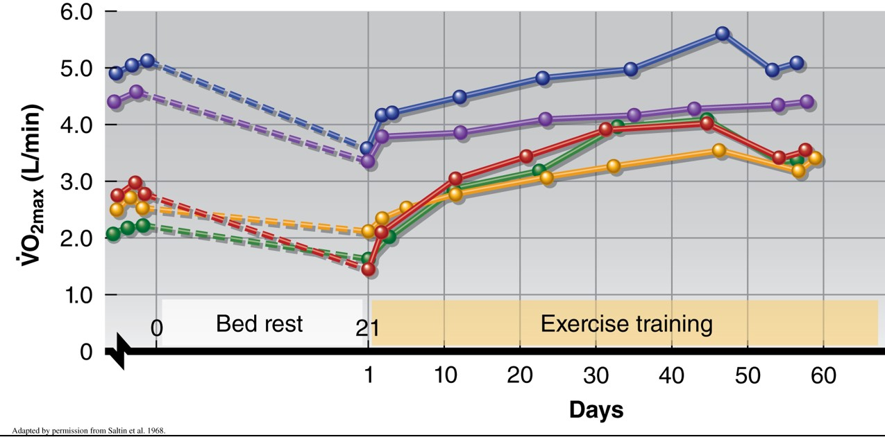 VO₂ max takes longer to regain in highly trained individuals. Source: Kenney & Wilmore & Costill (2012)