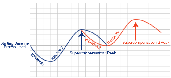 Image 1 - The General Adaptation Syndrome (Super-compensation cycle).