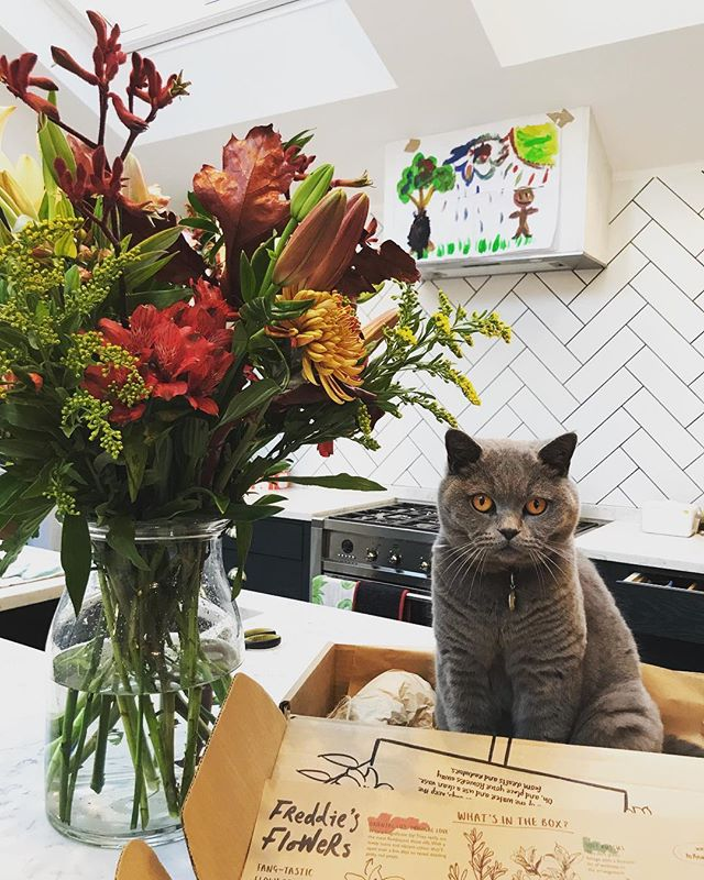 No better way to complete a room then with freshly cut flowers. Gary certainly agrees. We're loving this weeks autumn inspired bunch from @freddiesflowers 🍂 . #interiordesign #interiors #herringbonetile #englishshorthair