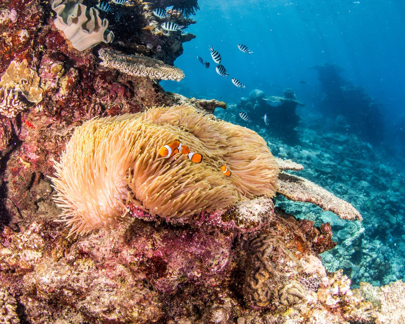 reef7 2.jpg