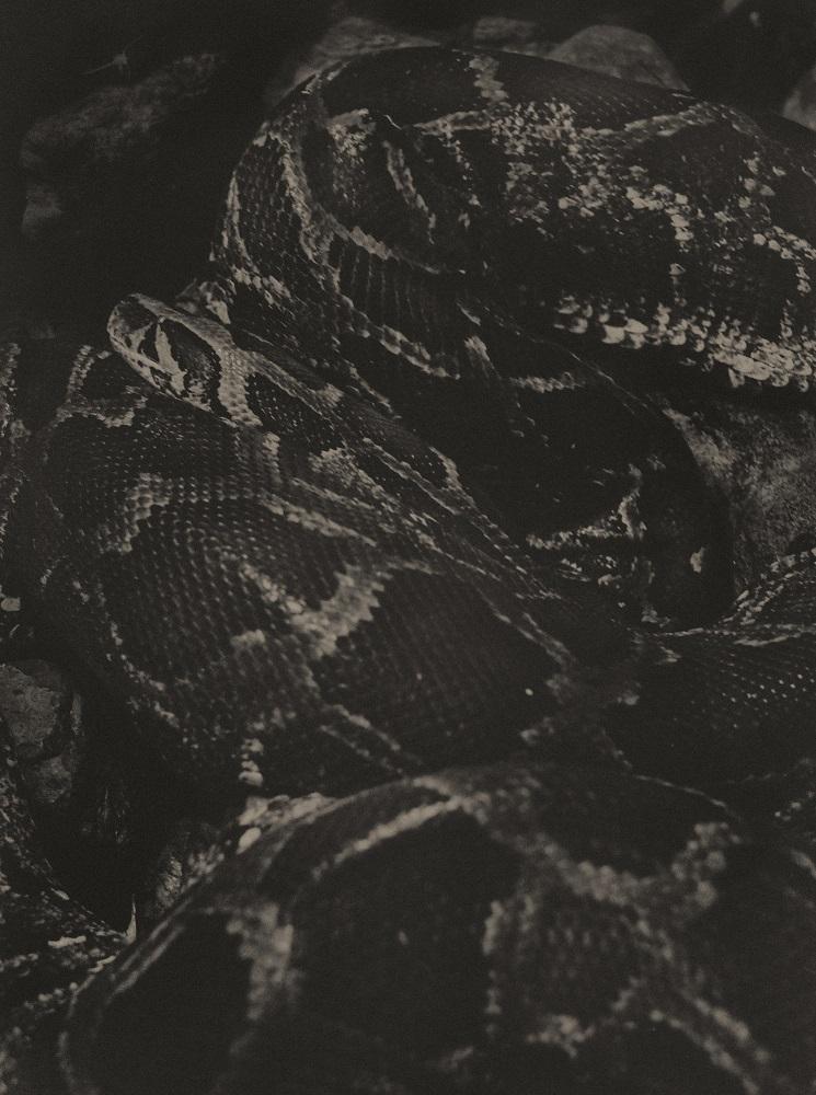 reptilepark018.jpg