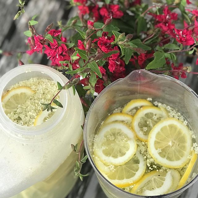 Pure summer essence in a bottle ☀️🍾 The elderflower champagne 🥂is started and doing its magic ✨✨Thank you to my friend Megan for foraging the best flowers with me today and sharing such a perfect summer day 💛💛 Let's do that again soon! 😘