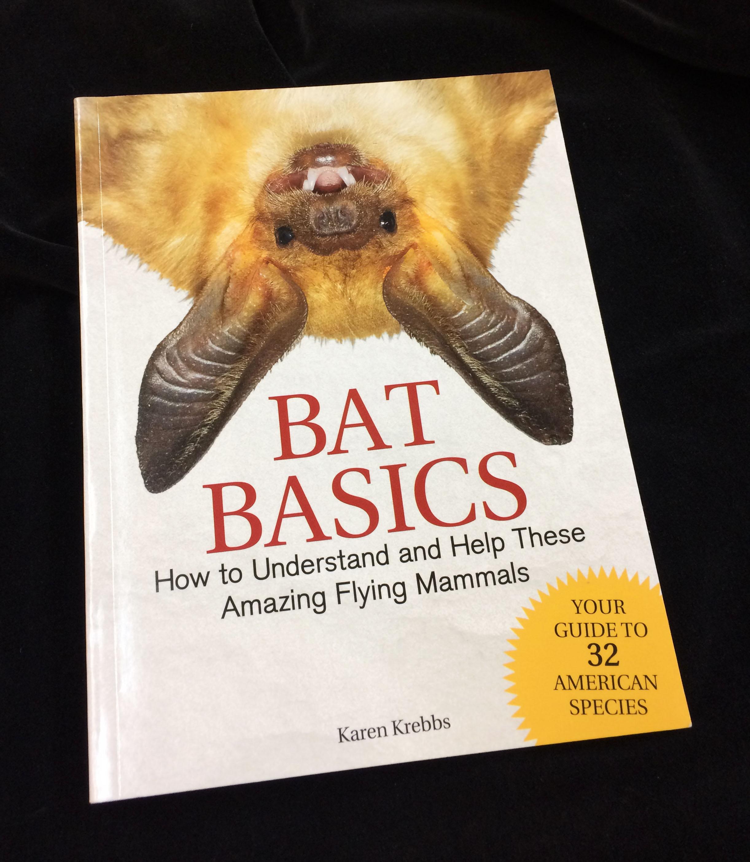 Bat basics on black.jpg