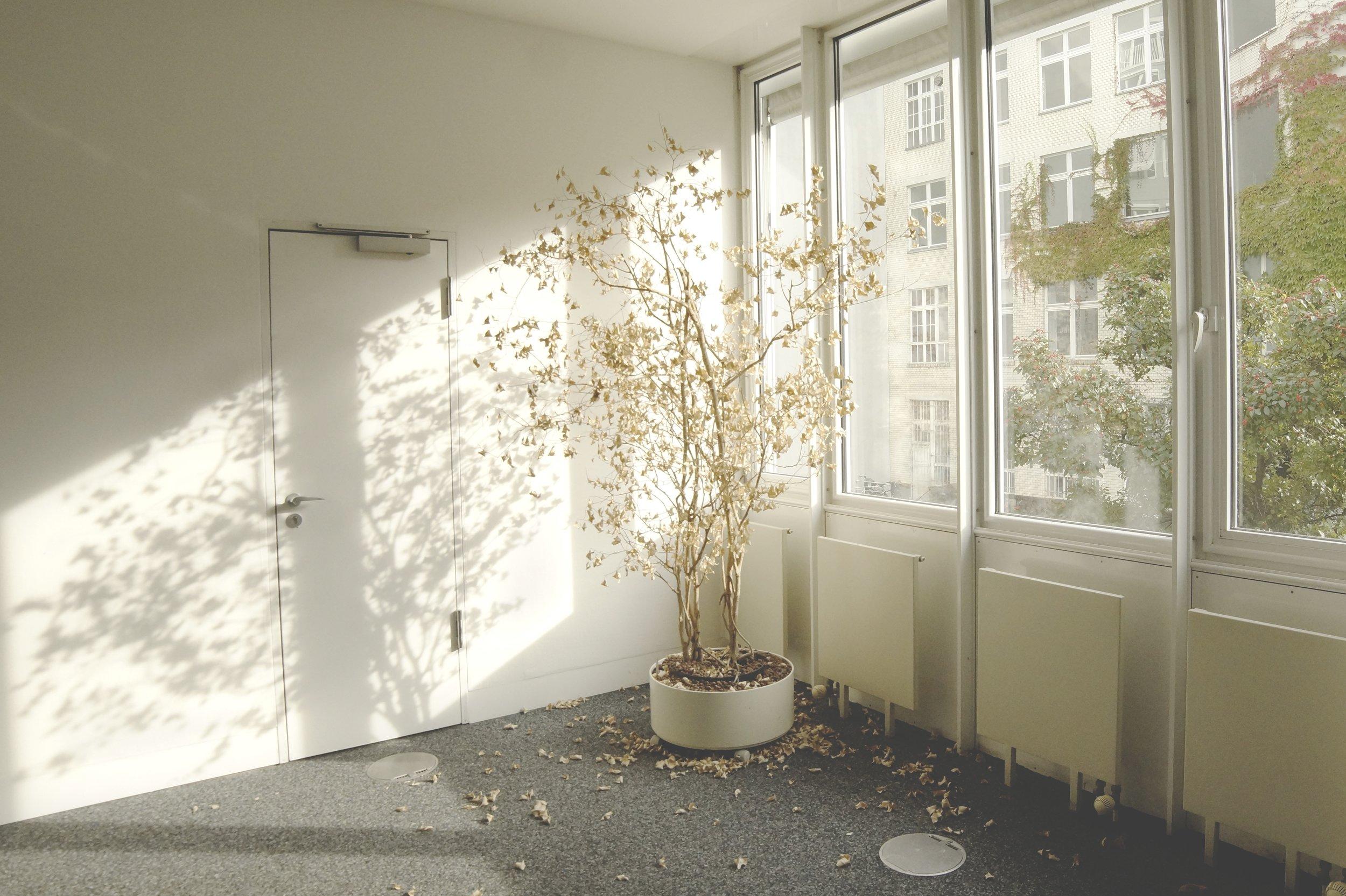 dried tree near window in yellow light