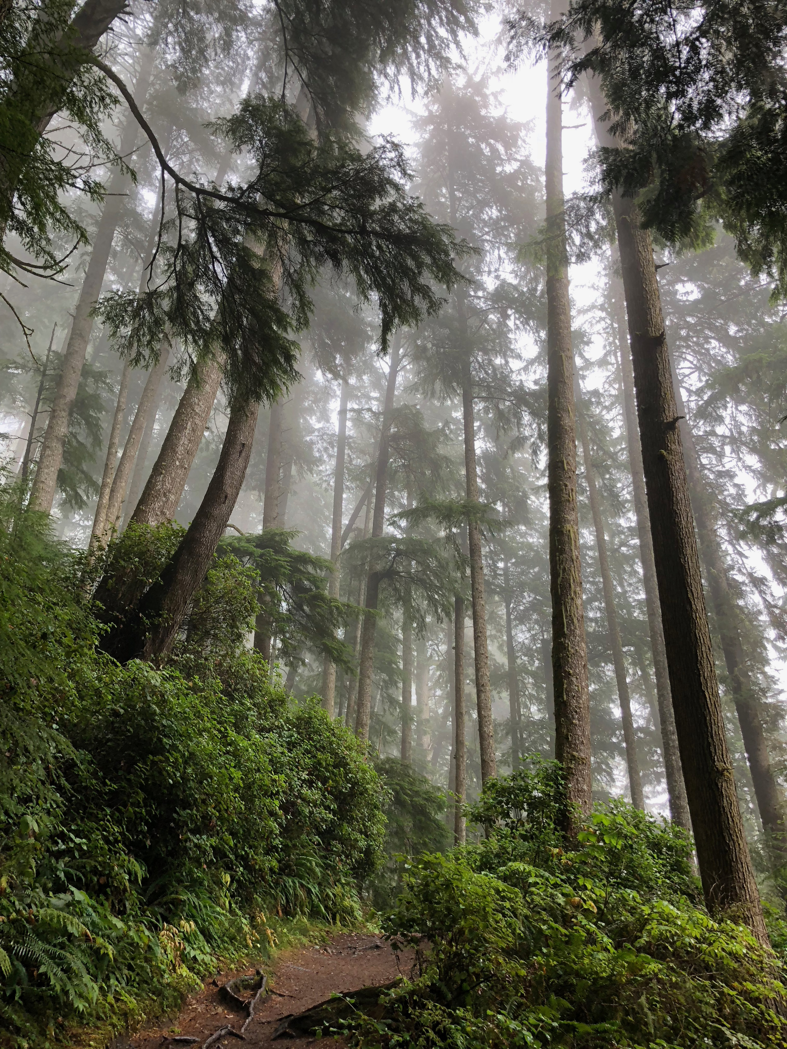 TALL TREES   The biggest Douglas Fir in the world lives on Vancouver Island. Meet some trees over 1000 years old.
