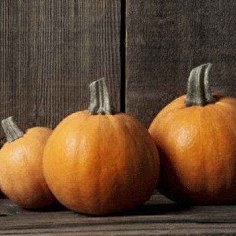 apotheque_spa_treatment-pumpkin.jpeg
