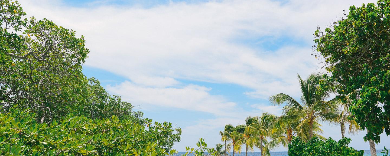 Aruba Renaissance-03.jpg