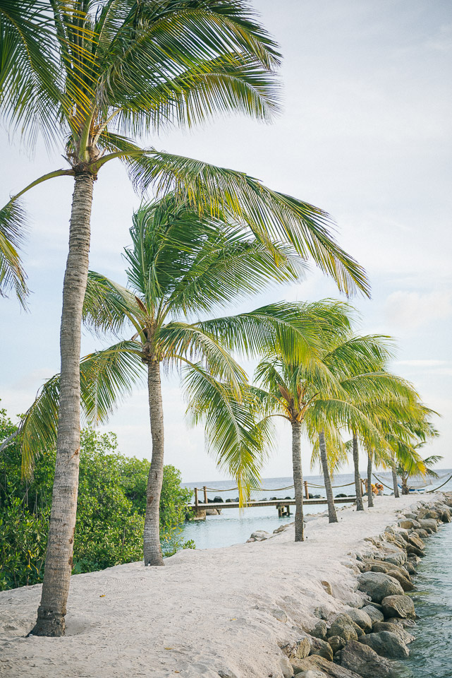 Aruba Renaissance-27.jpg