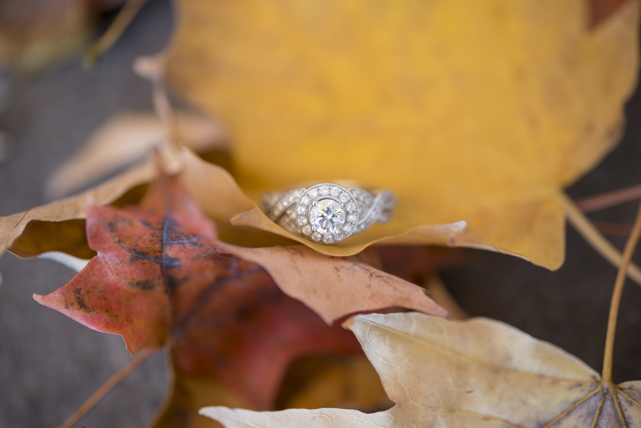 NH Wedding Photographer: fall engagement rings