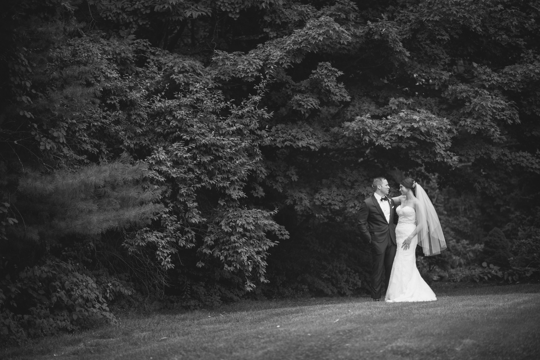 NH Wedding Photography: couple in front of trees