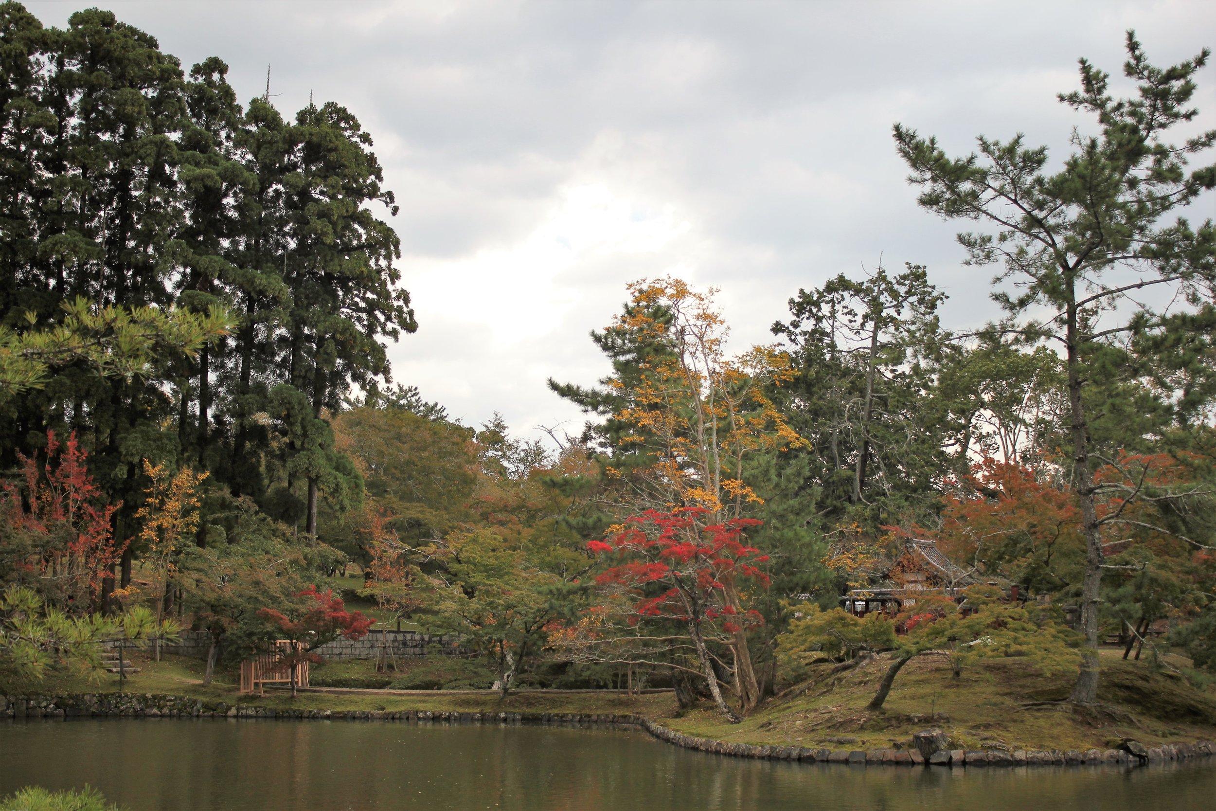 Kyoto Japan During Fall