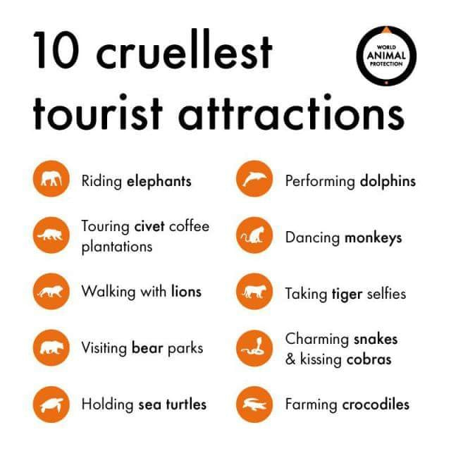 Ethical Animal Tourism