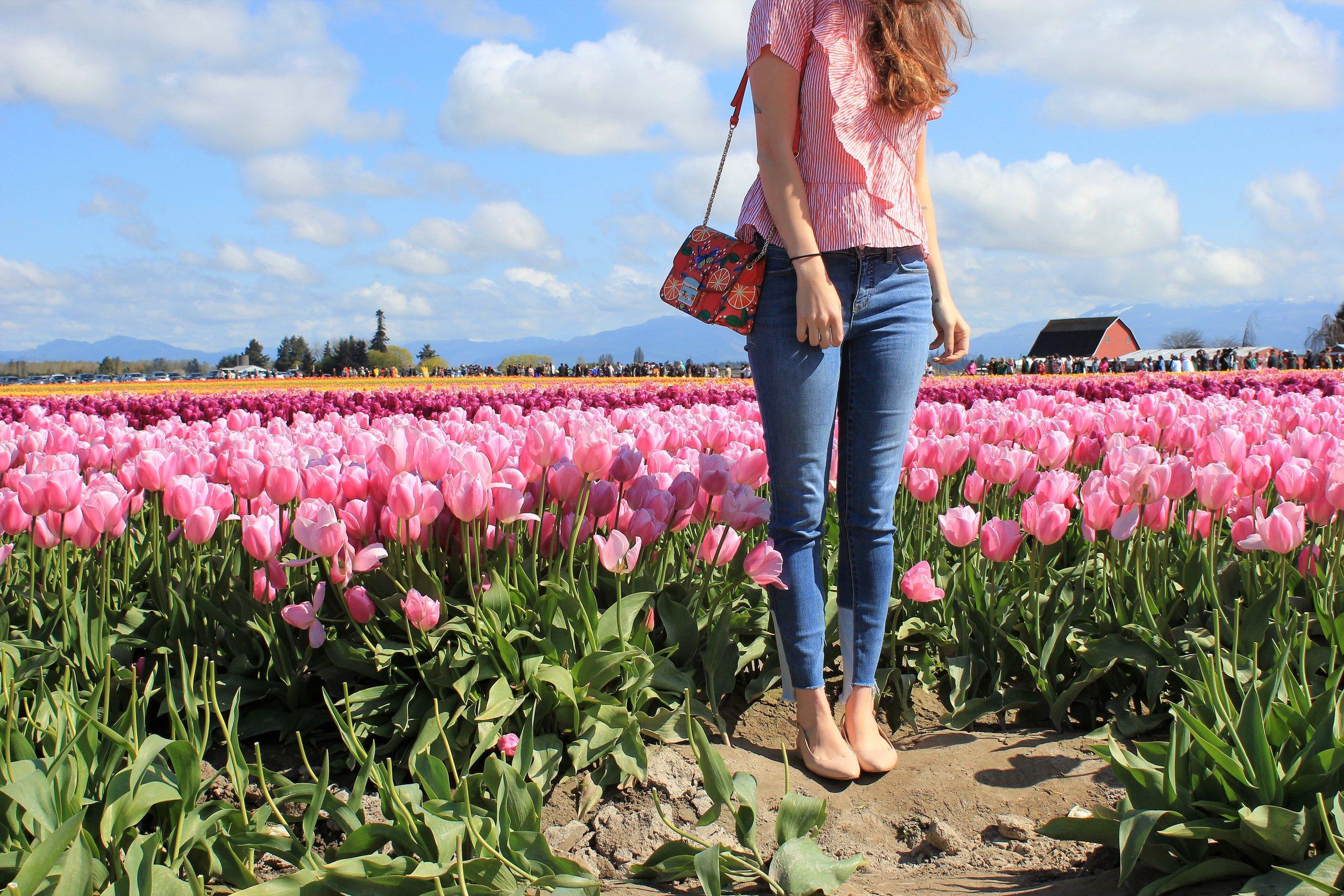 Skagit Valley Tulip Festival near Seattle, WA