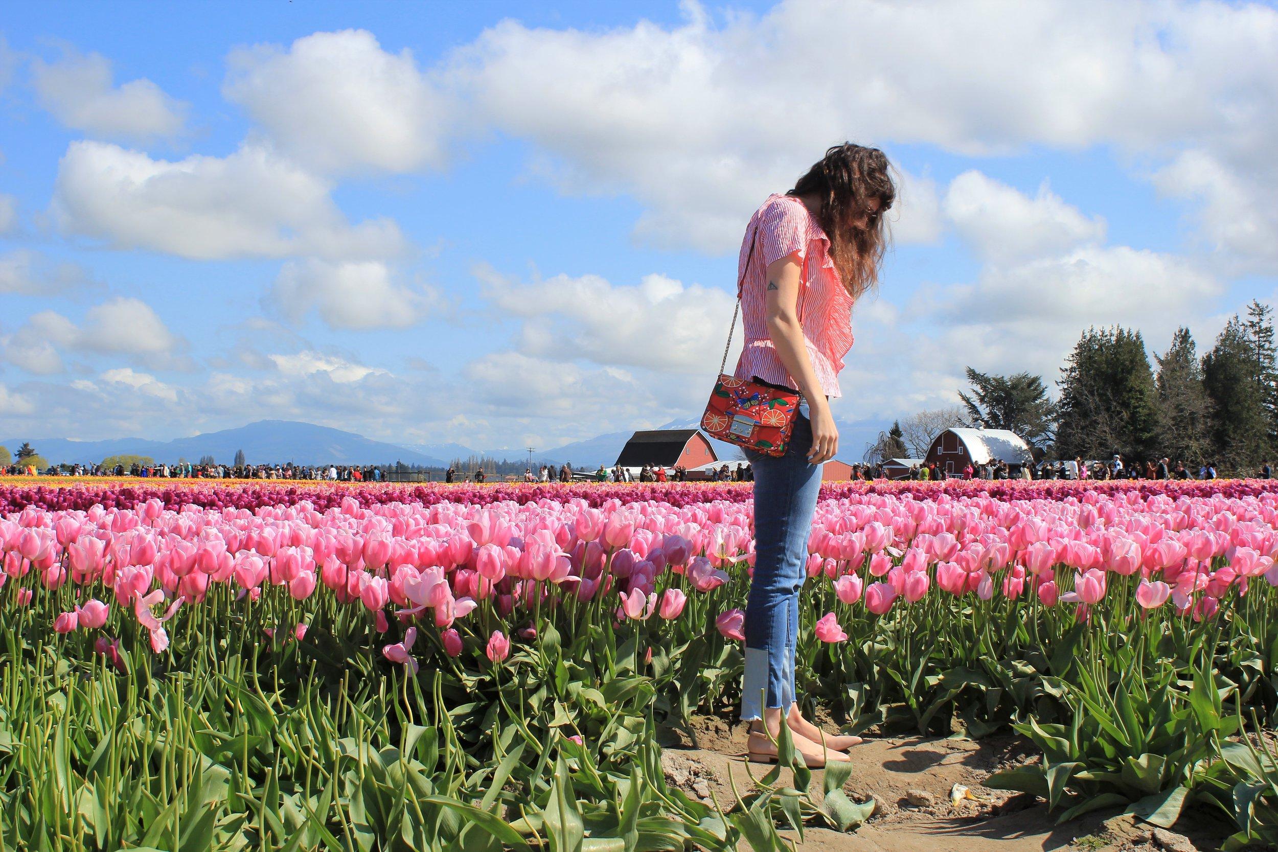 Pacific NorthWest Tulip Festival
