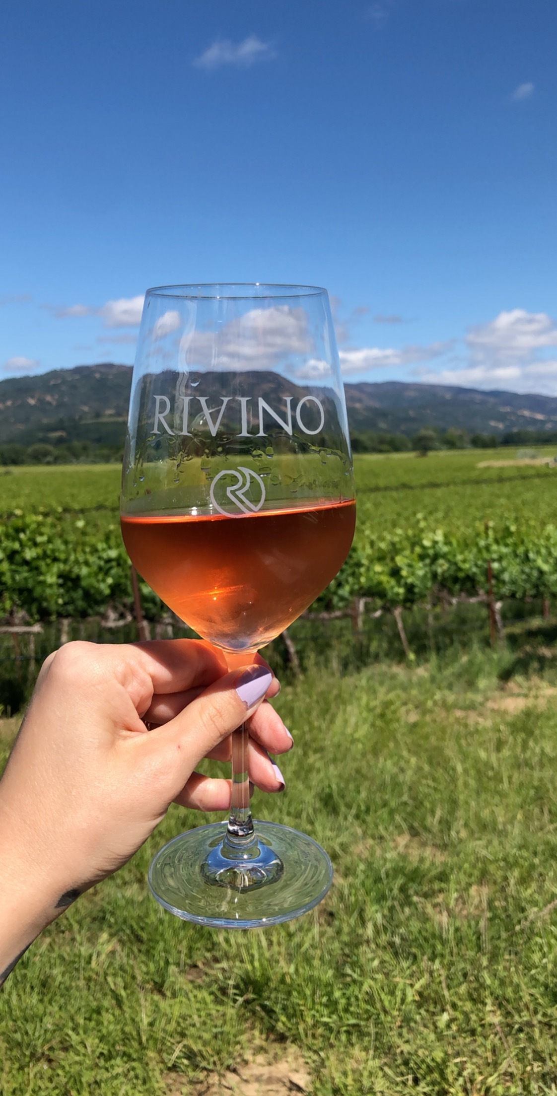 Rivino Winery - a top dog friendly winery in California