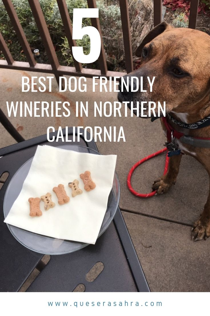 the FIVE BEST Dog Friendly Wineries in Northern California