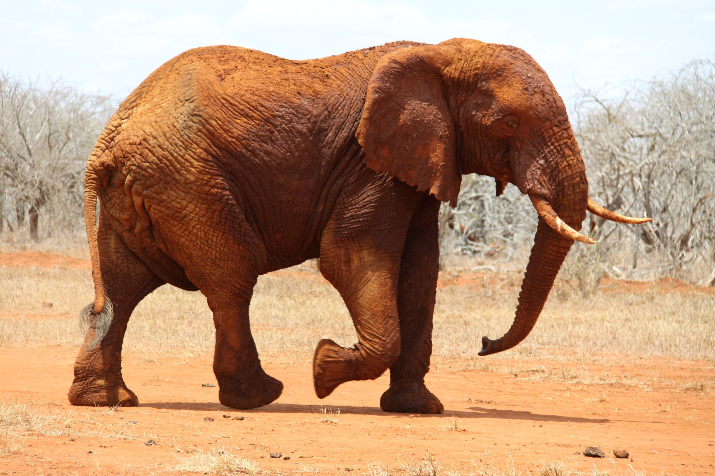 3an alternative to poaching wildlife.jpg