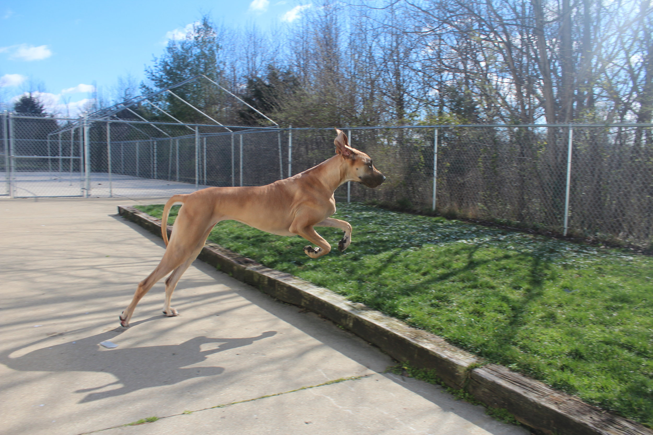 Pet Nation Lodge has four outdoor play areas for boarding and daycare dogs. Each yard is at least 4,000 sq ft so your dog can use up a lot of their energy running around and playing.