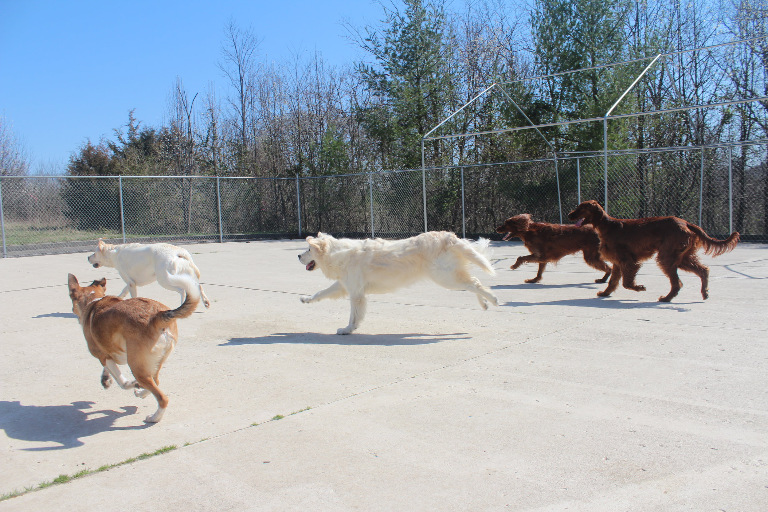 With so much space here at Pet Nation Lodge there's a lot of playtime to be had with new and old friends. All you need is a tennis ball and a decent arm and you've got some happy dogs.