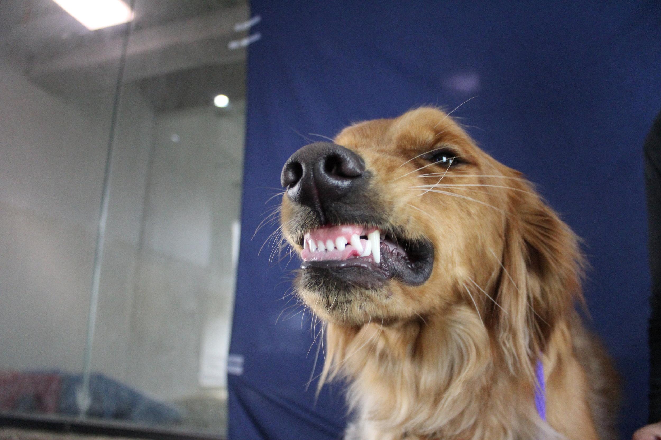 Pet Nation Lodge Boarding Dog Kobe 5