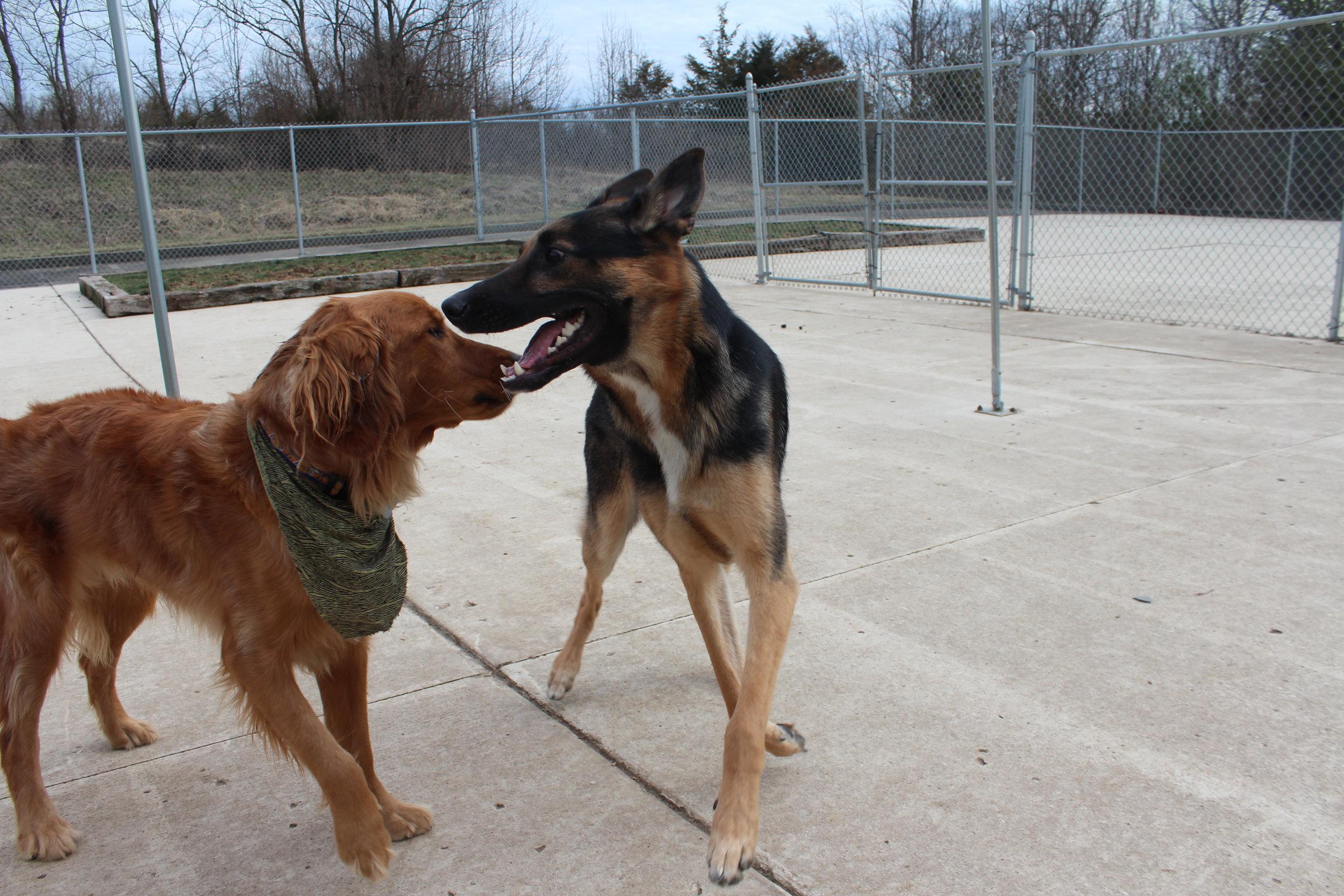 Pet Nation Lodge Boarding Dog Hunter 3