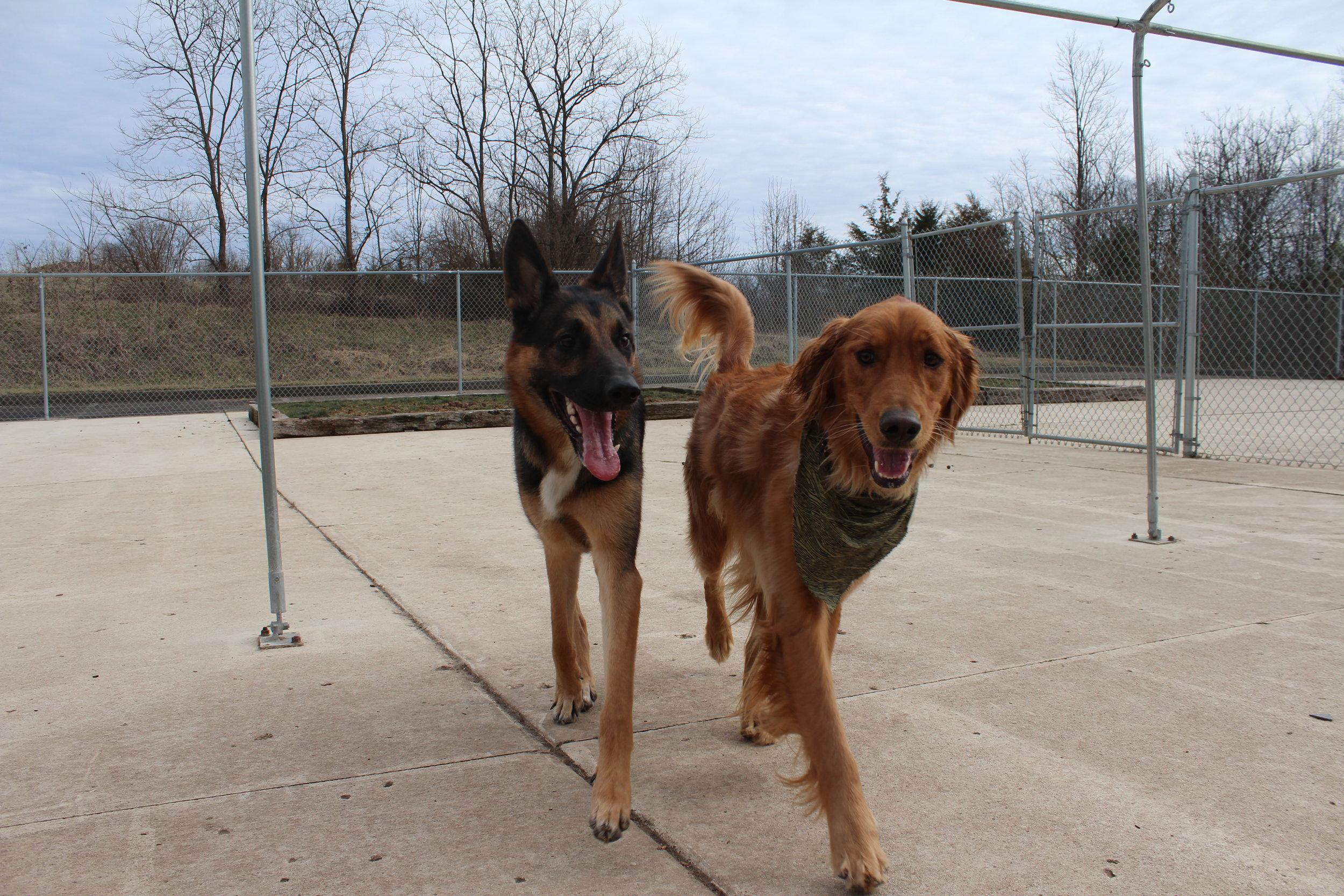 Pet Nation Lodge Boarding Dog Hunter 4