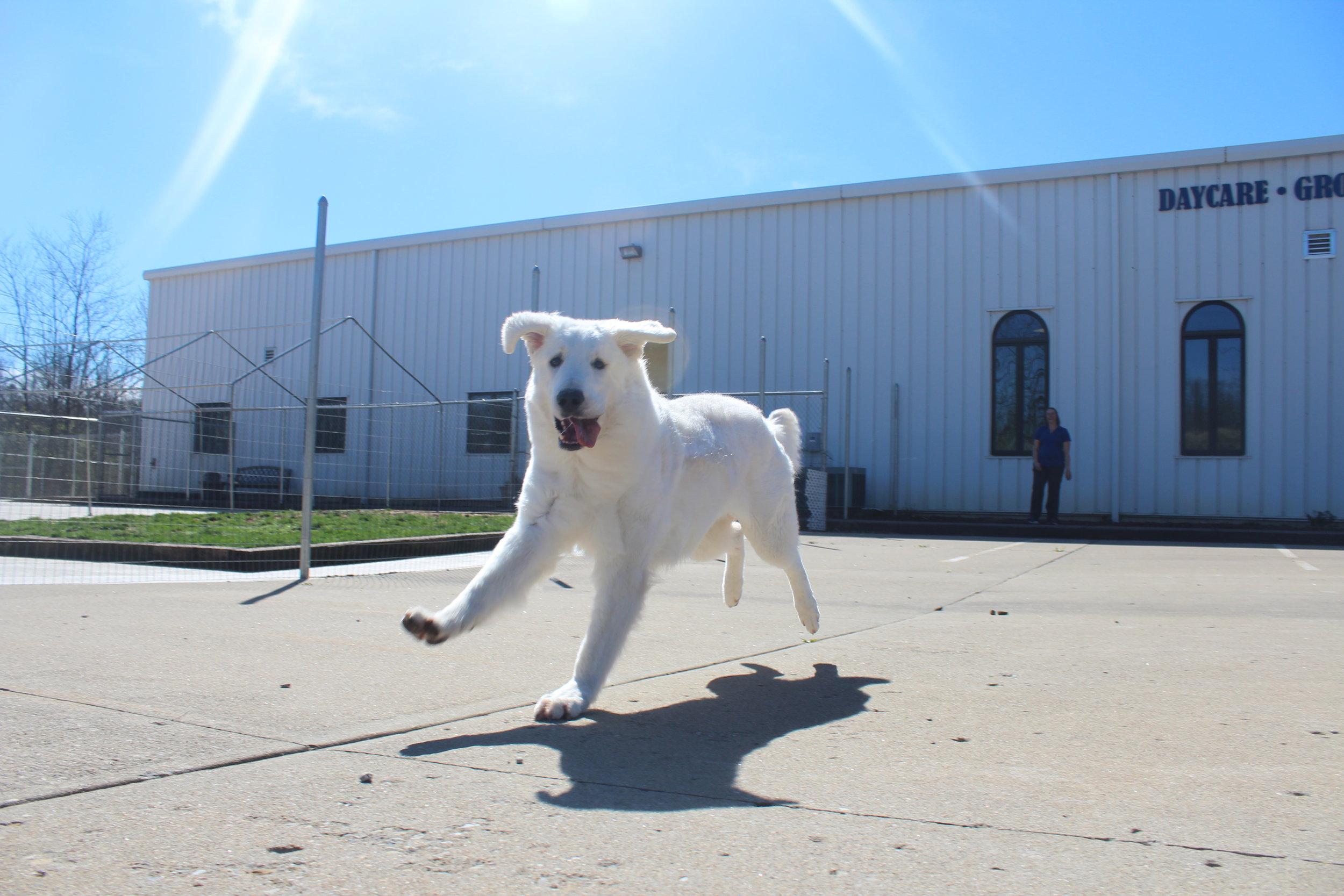 Pet Nation Lodge Daycare Dog Mo'ne 1