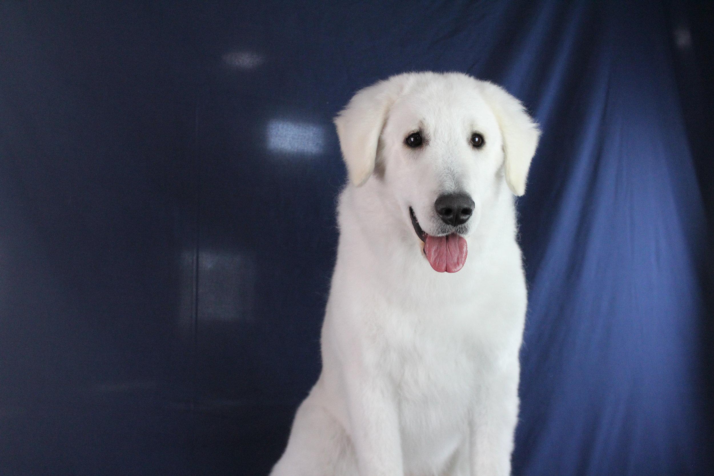 Pet Nation Lodge Grooming Dog Mo'ne 2