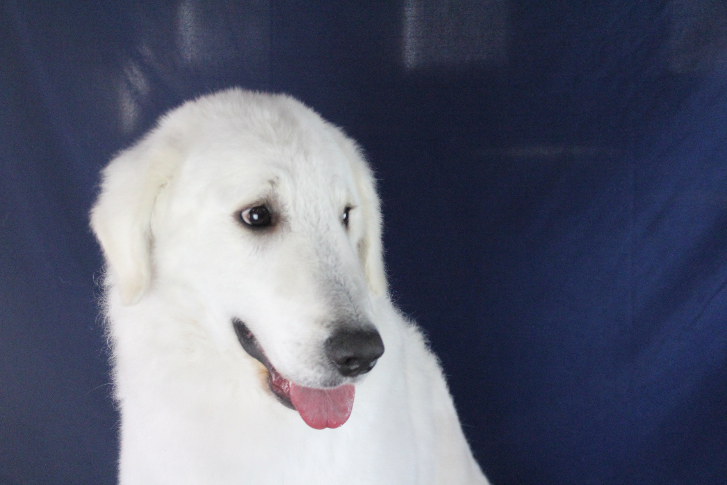 Pet Nation Lodge Grooming Dog Mo'ne 3