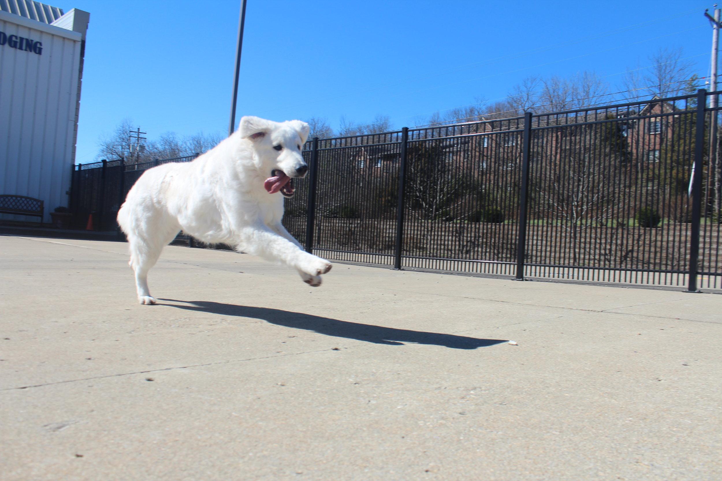 Pet Nation Lodge Boarding Dog Mo'ne 4