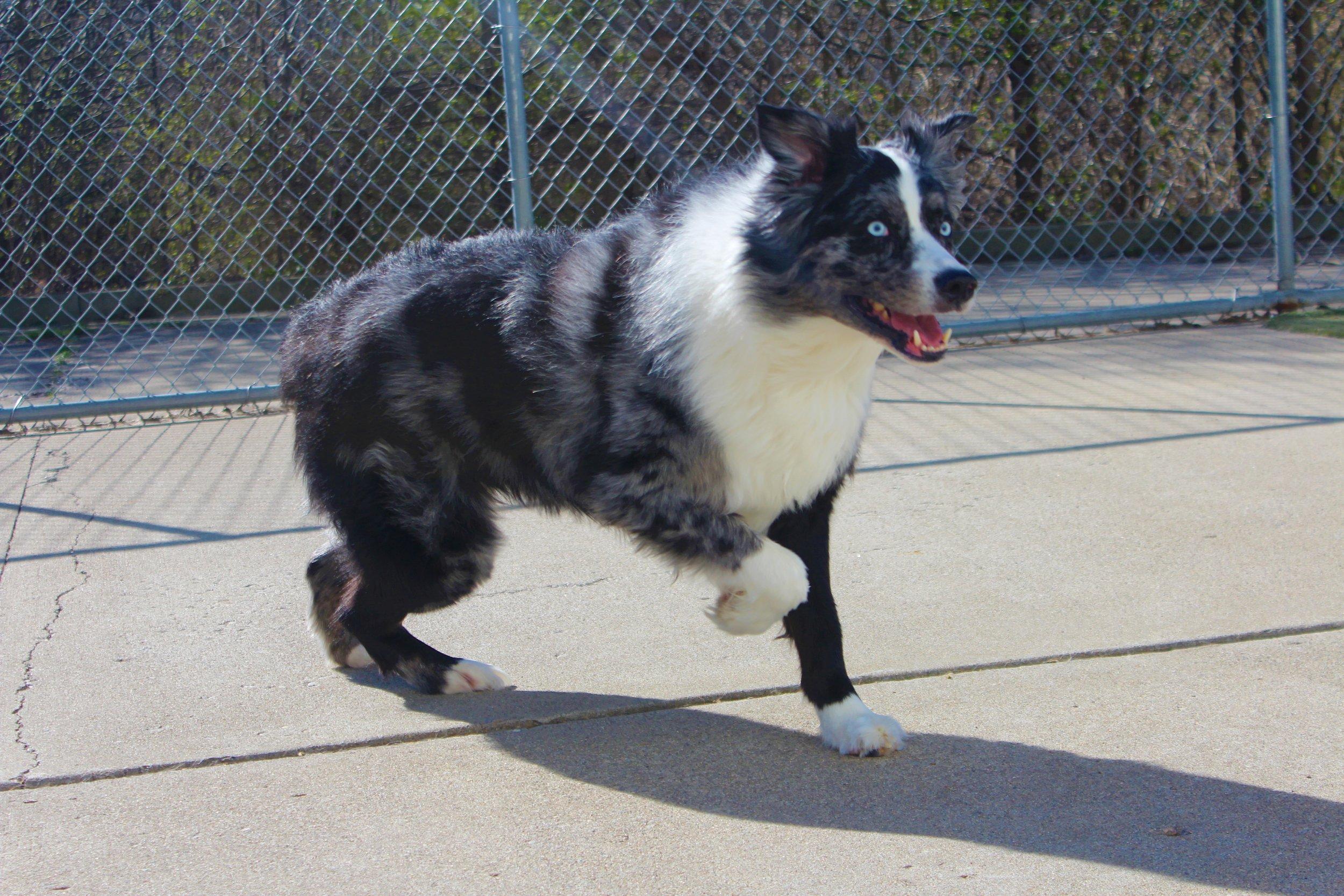 Pet Nation Lodge Daycare Dog Blue 1