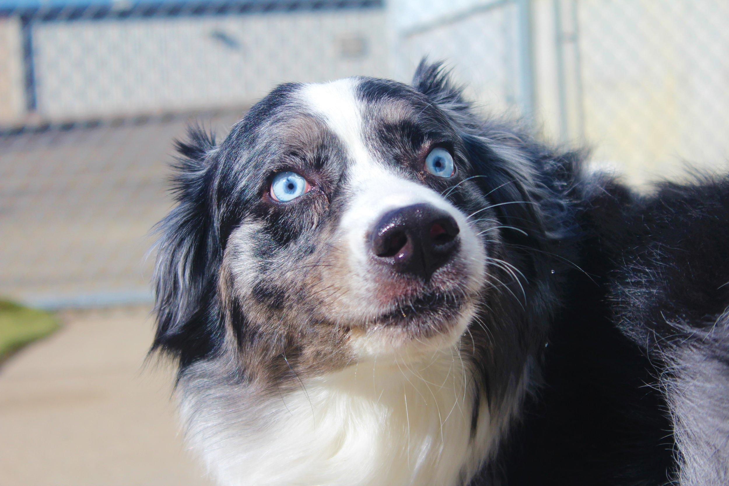 Pet Nation Lodge Daycare Dog Blue 3
