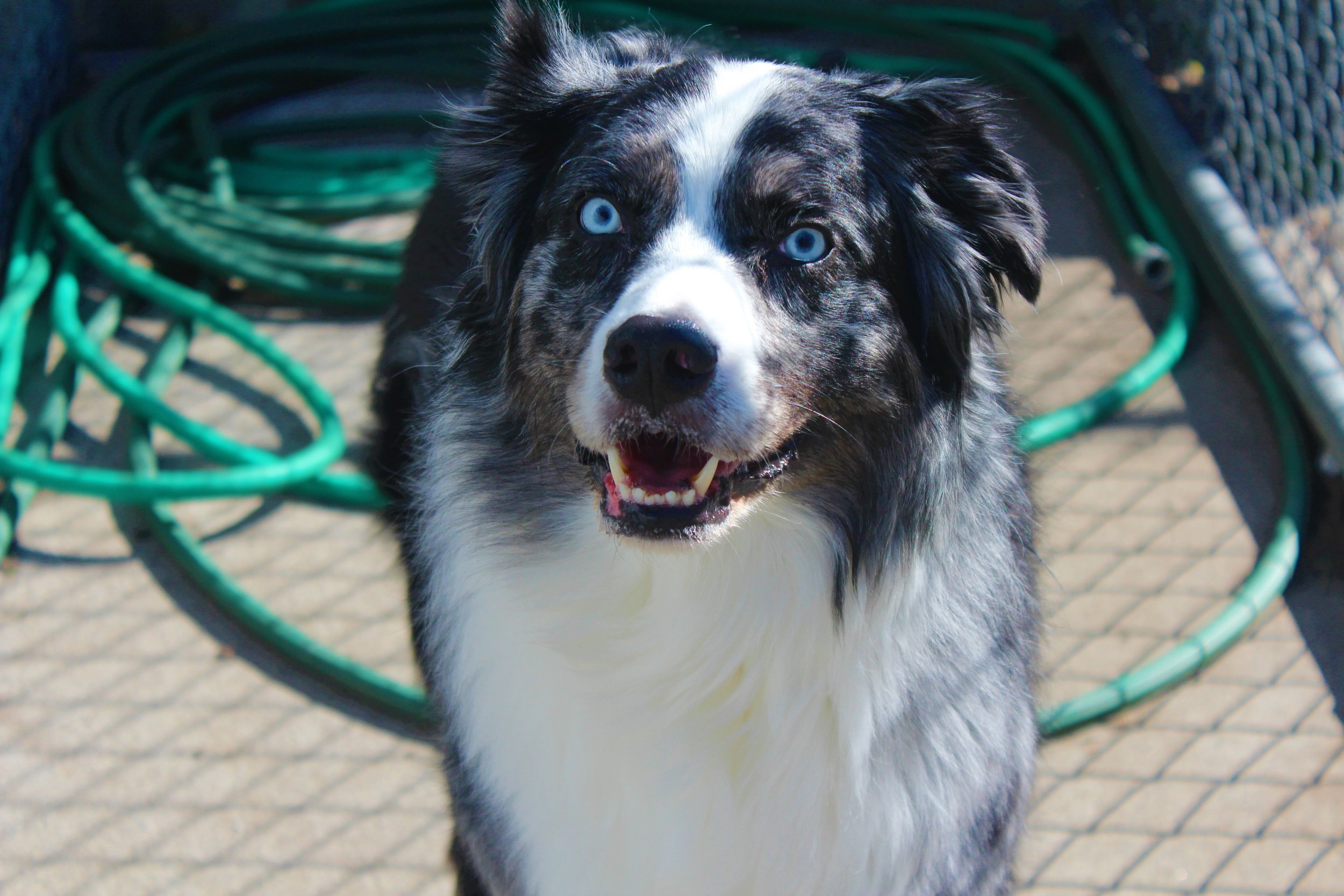 Pet Nation Lodge Boarding Dog Blue 5