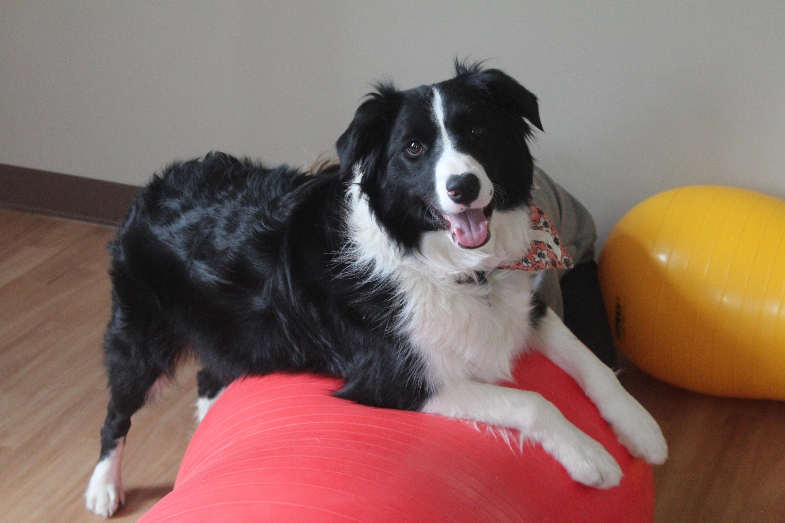 Pet Nation Lodge Daycare Dog Jetta 6