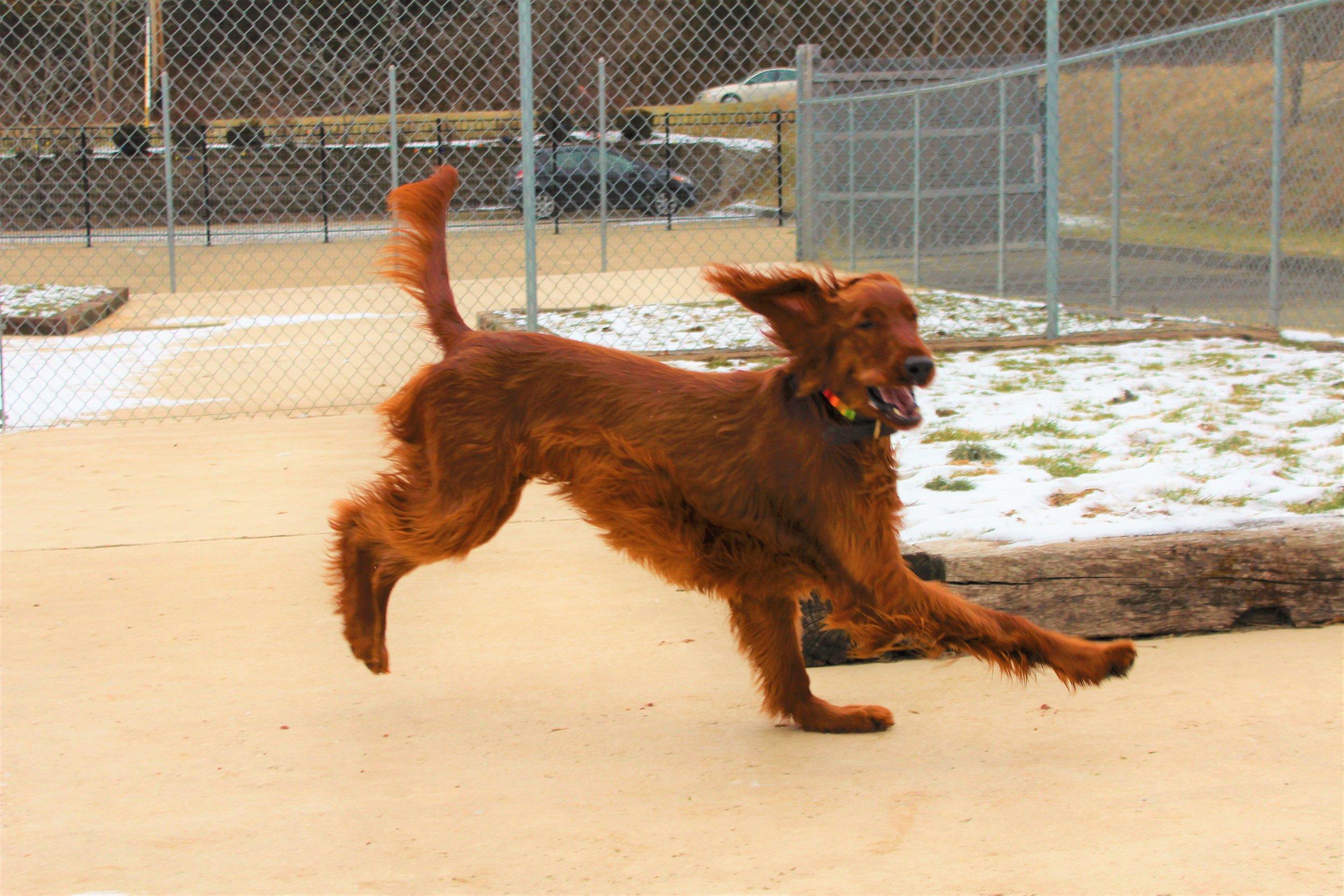 Pet Nation Lodge Daycare Dog Kiley & Riley 2