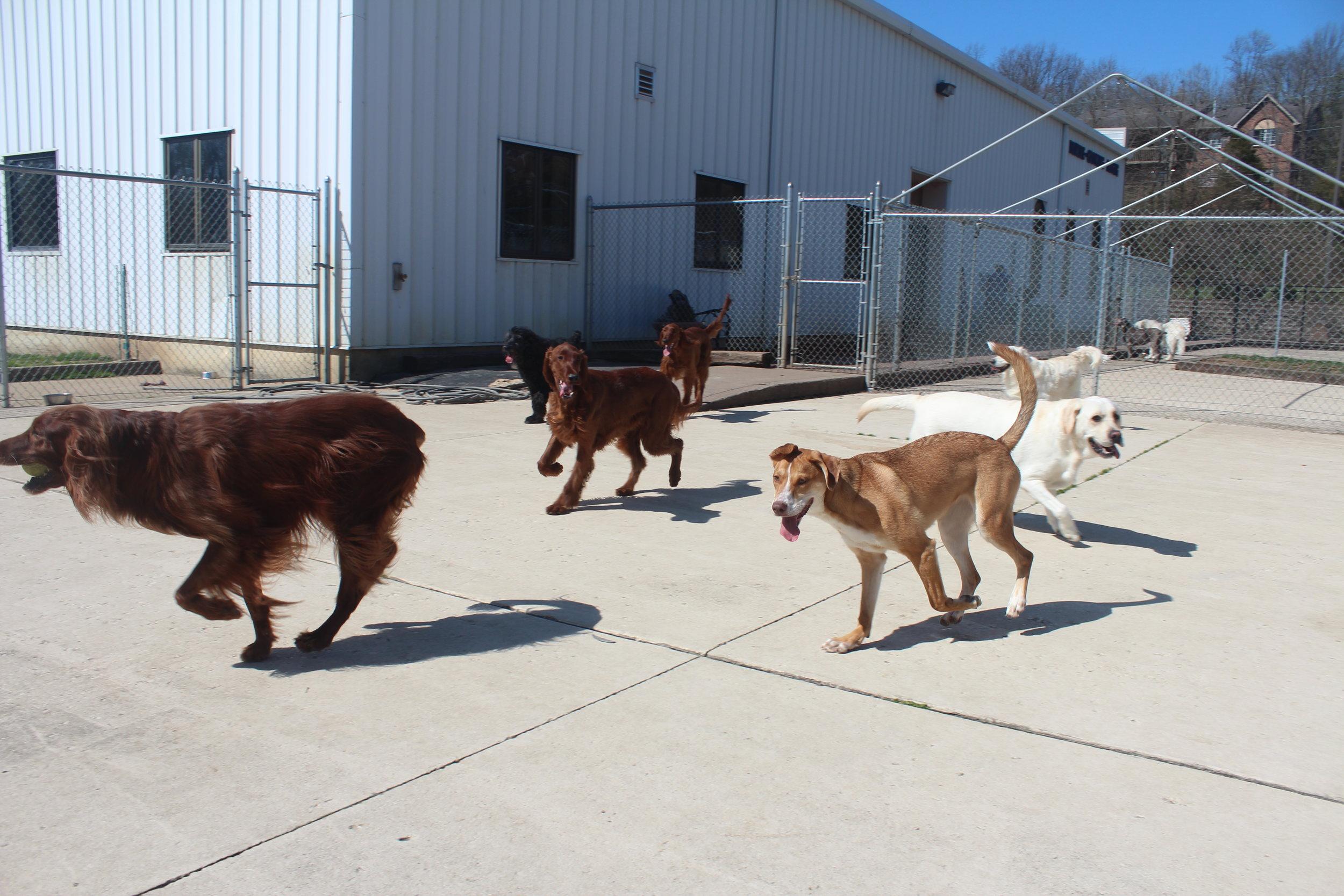 Pet Nation Lodge Boarding Dogs Kiley & Riley 3