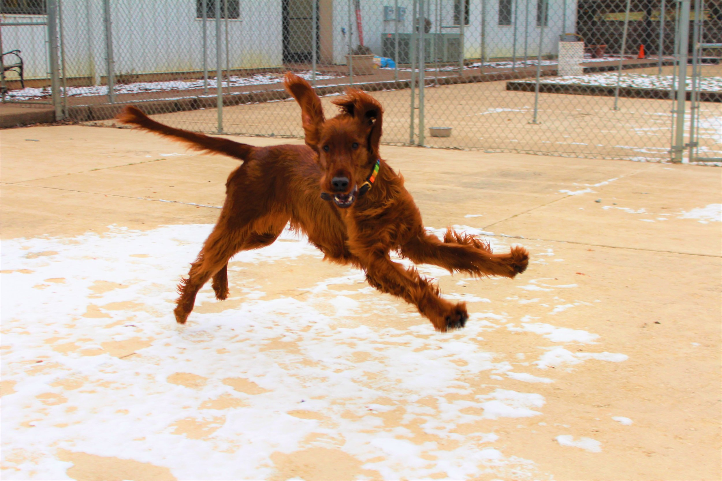 Pet Nation Lodge Dog Kiley & Riley 6