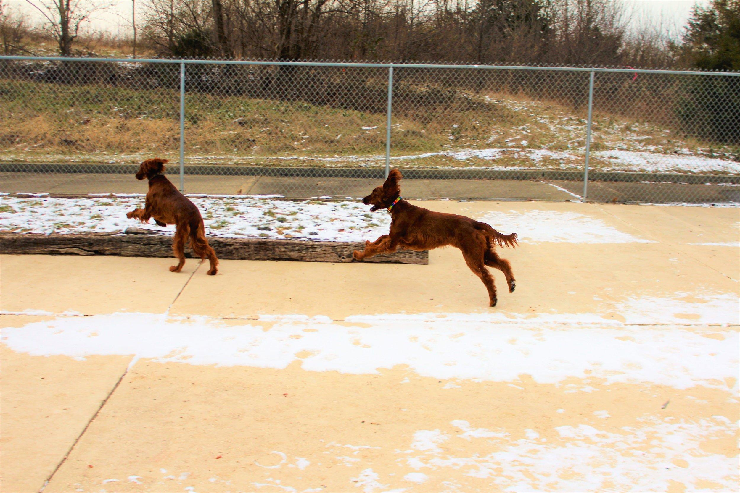 Pet Nation Lodge Boarding Dogs Kiley & Riley 7