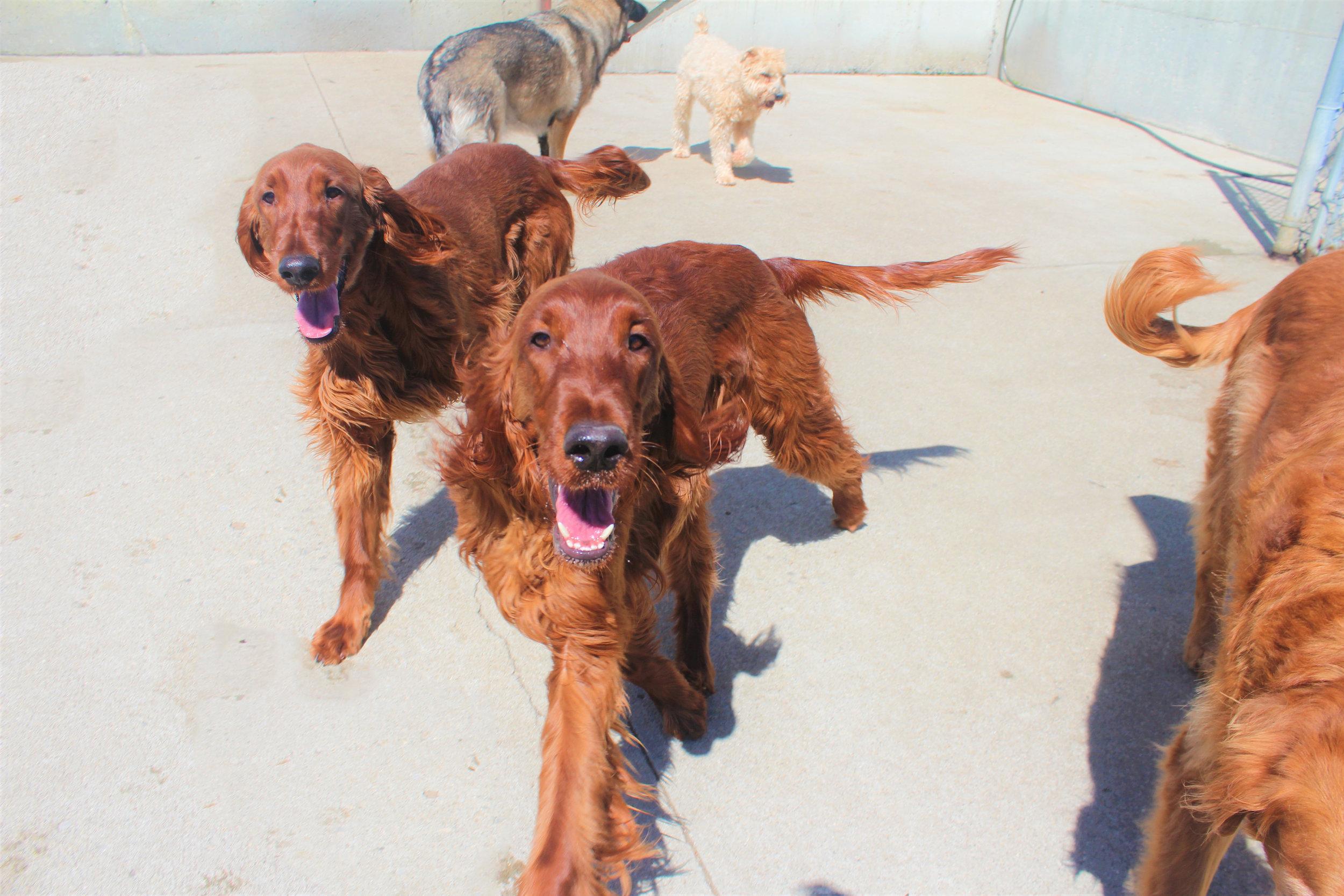 Pet Nation Lodge Boarding Dogs Kiley & Riley 5
