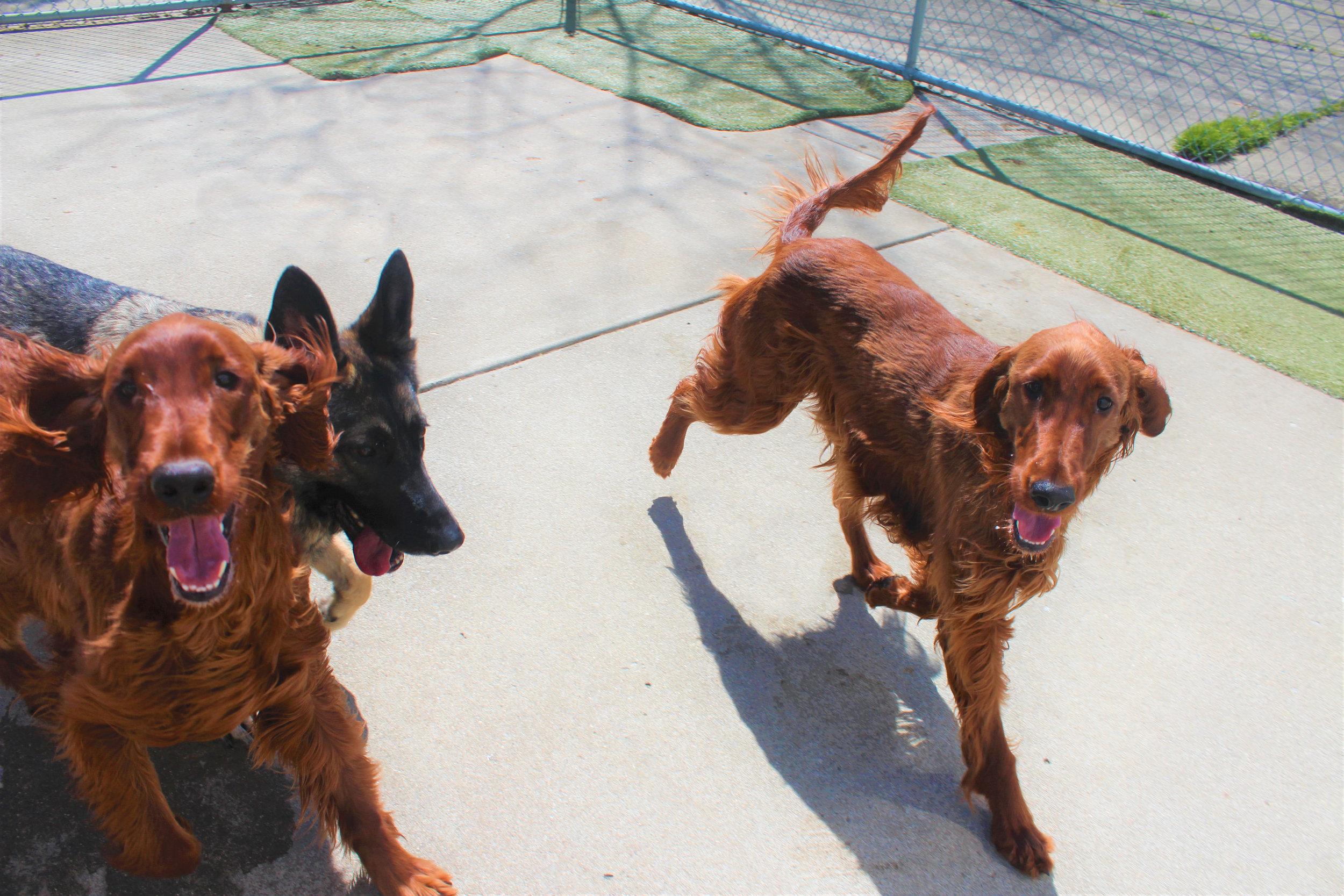 Pet Nation Lodge Daycare Dogs Kiley & Riley 8