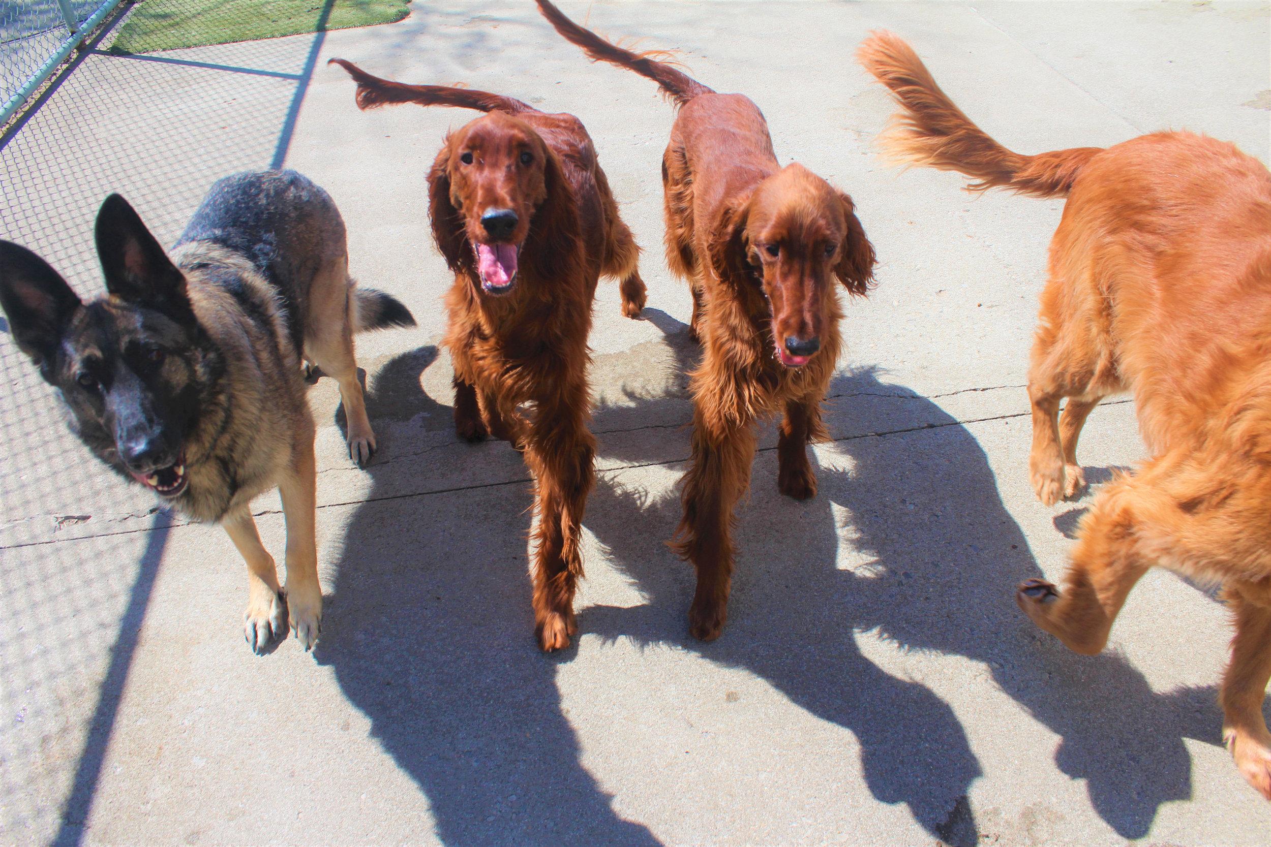 Pet Nation Lodge Daycare Dogs Kiley & Riley 4