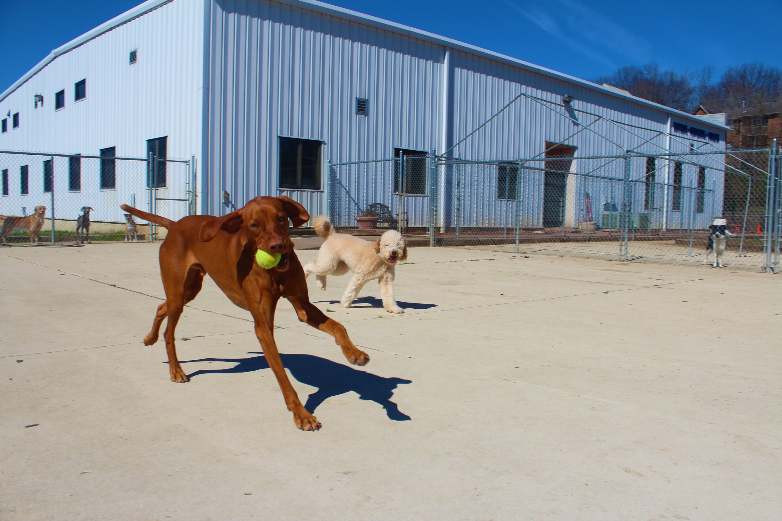 Pet Nation Lodge Daycare Dog Kash 1
